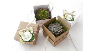 plantes-succulentes-cadeaux-invites-mariage3