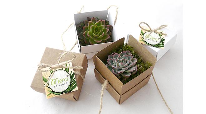 plantes succulentes cadeaux invites mariage3